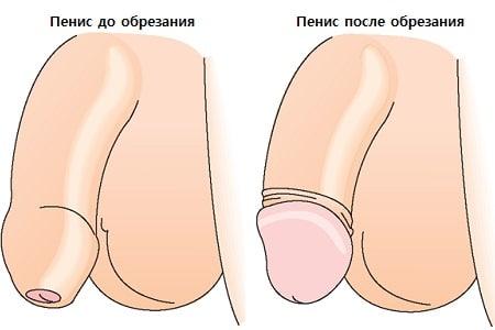 golova6.jpg