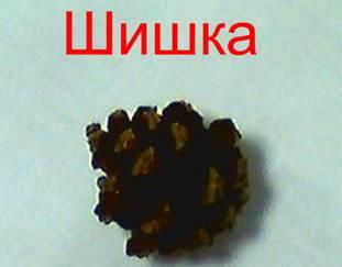 image014_15.jpg